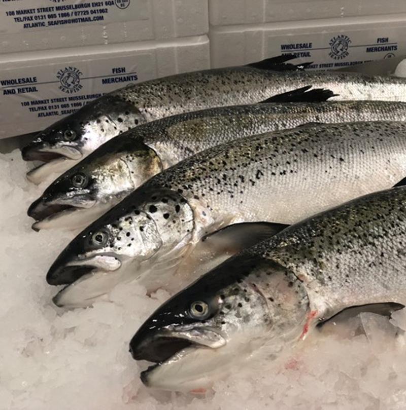 Atlantic Seafish | Fish Wholesale & Fish Distribution in Musselburgh
